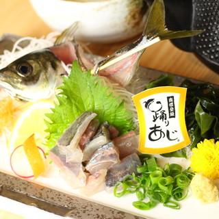 【踊りあじ姿造り】や【出汁茶漬け】など◎人気漁港ごはんを堪能