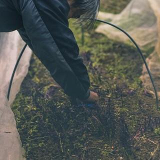 地産地消◎顔の見える生産者様から届く自然栽培の元気な野菜!
