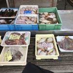 厚田港朝市  - 鮮魚