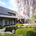 遊神館 - 立派な庭に大きな枝垂れ桜