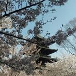 84893667 - 東寺の桜