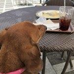 セタビカフェ - 良い天気ね〜!
