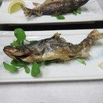 五箇山温泉 赤尾館 - 料理写真:[夕食]岩魚の塩焼き