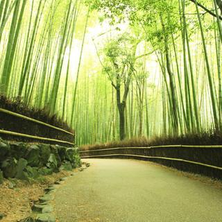 四季折々、京都ならではの食材や地酒を東京で味わう