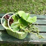 竹仙郷 - 山菜は沢山採れました