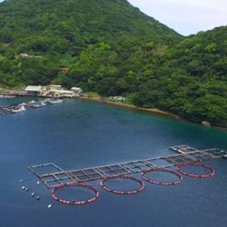 自然豊かな海から産地直送される鮮魚