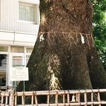 クリマ ディ トスカーナ - 大樹 クスノキの後ろにお店があります
