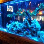 虹 - 店内には青い水槽がたくさん!