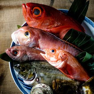 市場直送の鮮魚磯浜名物「のどぐろ」「きんき」