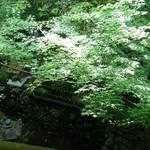 菊乃井 - 二階からの眺め…若紅葉がなんとも光に映える