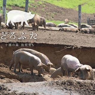 帯広産240日完全放牧のどろ豚を使用