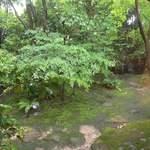 85777696 - お庭です。緑に囲まれてます