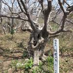 カフェ アトリエ おくむら - 般若の木