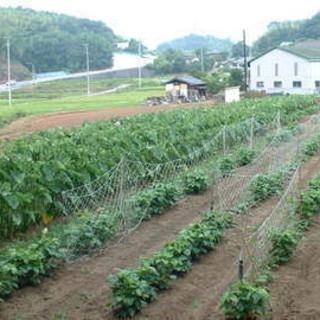 実家の農家から野菜が届きます