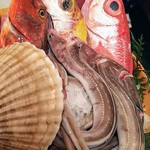 86042429 - 本日のおススメ鮮魚