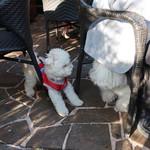 カフェ ラ・ボエム - 仔犬の訪問