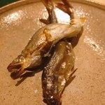 井本 - 琵琶湖の鮎
