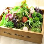菜色ちぎり野菜のしょうきサラダ