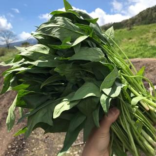 ★だから安心♪長野県開田高原の『自家製農園野菜』