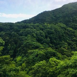 新緑~紅葉~凜と冷えた冬の風、四季の箱根を眺めながら