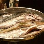 タンドール料理ひつじや - 本日の魚のお披露目