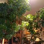 フクサコ - 初夏、店内はまるで森のよう。枝ものは『あせび』。馬が葉を食べると酔ってしまう木。