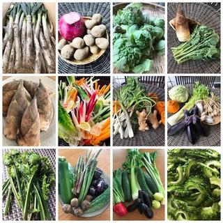 全国からの採れたて新鮮野菜を日替わりオススメお料理でご提供!