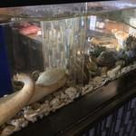 寿司割烹 八風 - 店内活魚水槽で活貝類を提供
