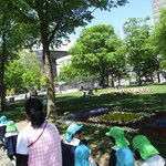 86688540 - 大通公園の風景2【2018年5月】