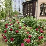 ラ・メゾン・キオイ - 赤いバラが綺麗でした