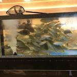 水天 - 店内の水槽 魚の入れ過ぎじゃないの?