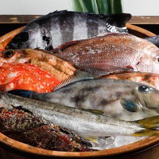 船上神経〆鮮魚