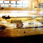 磯のがってん寿司 - 内観;水槽のミル貝、あわび、穴子など