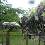 函館カレー エクスプレス - [風景写真]白と紫の藤とつつじの競演
