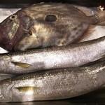 ワインバー ヌーバ - 三浦産特大本カマス、イタリアでは高級魚のマトウダイ入荷!
