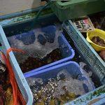 87208796 - 海産物直売所の新鮮な貝