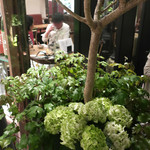 恵比寿 箸庵 - 紫陽花の季節になりました