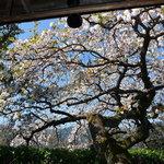 Sekiyou - 客室「桜」からの眺め① 「枝垂れ桜」との掛け合わせ