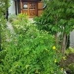 レストラン木木 - 緑のお庭が綺麗でした