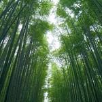 87496760 - 竹の小径を抜けて