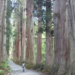 87512770 - 凄い杉並木