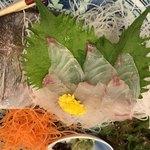 海賓亭 - 活真鯛の姿造り