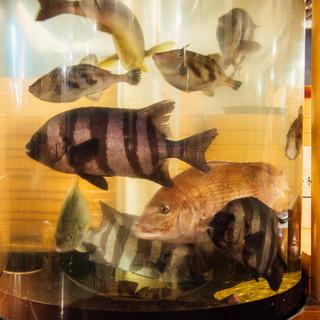 店内の生簀には常時4種類以上の活魚を用意しています。