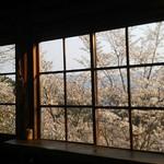 陽ぼっこ - 下千本桜絶景