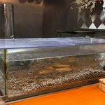 石臼挽き手打 蕎楽亭 - 水槽で泳ぐ稚鮎