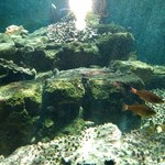 珊瑚礁 -