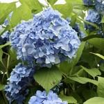 花の食品館 -