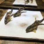 Mitsuyasu - ◆鮎の塩焼き いつもながら鮎が泳いでいるような躍動感ある盛り付け。