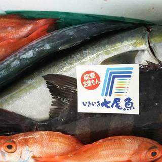 6月22日(金)本日のお魚入荷情報