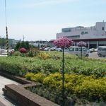 Jolly Jellyfish - 函館競馬場正面の花壇
